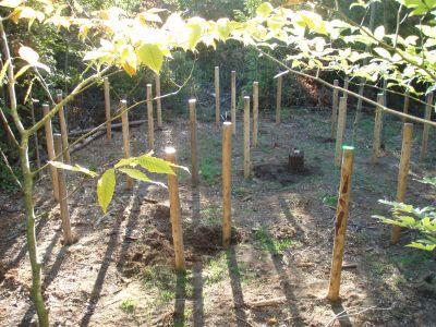 Forest-Woodhenge-1