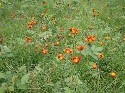 Forest Woodhenge - Wild Flowers 6