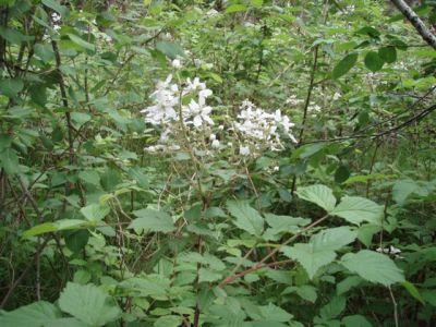 Forest Woodhenge - Wild Flowers 5