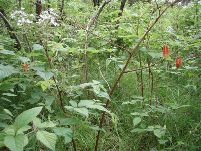 Forest Woodhenge - Wild Flowers 4