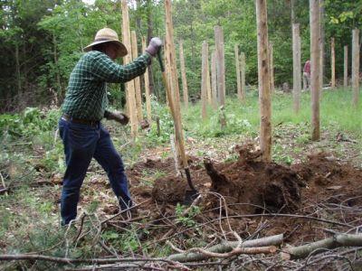 Forest Woodhenge - Bill Frey moving the big stump!