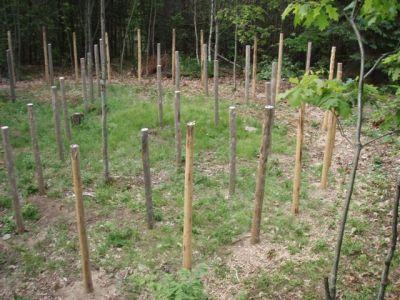 Forest Woodhenge - the western half!