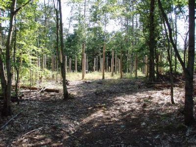Forest Woodhenge - Fall Equinox