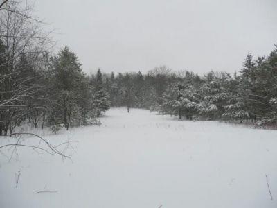 Forest Woodhenge - Winter Wonderland