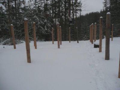 Forest Woodhenge - Groundhog Day 3