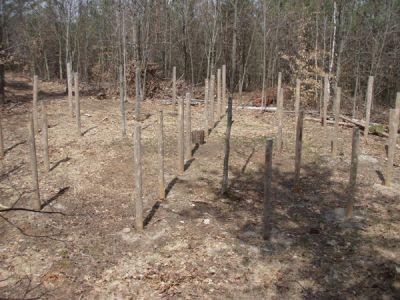 Forest Woodhenge -True Noon - Shadows Align