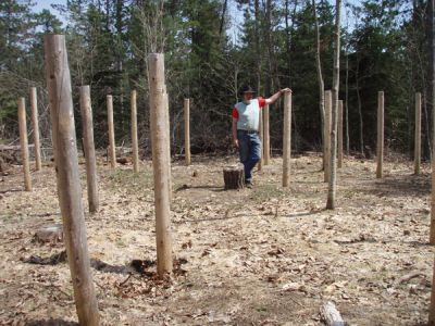 Forest Woodhenge - Bill Frey