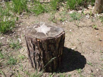 Forest Woodhenge - Star Stump!