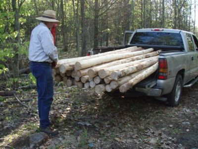 Forest Woodhenge - New Posts!
