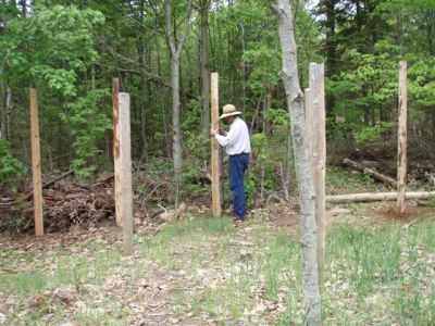 Forest Woodhenge - Bill Frey - the 32nd post!