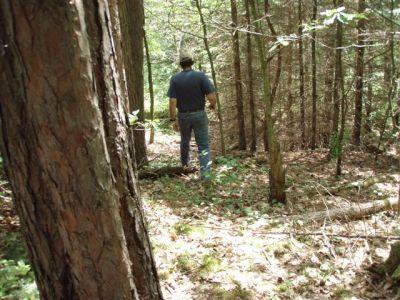 Forest Woodhenge - Eastern Path