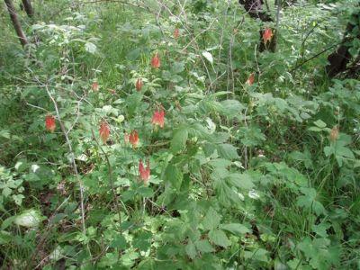Forest Woodhenge - Wild Flowers 2