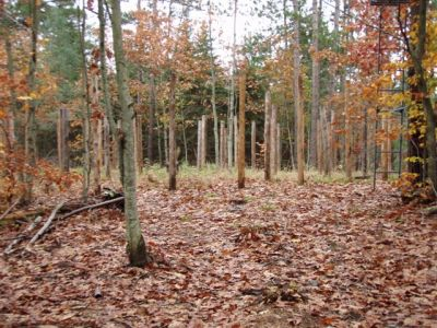 Forest Woodhenge - Scorpio - Approach (2)