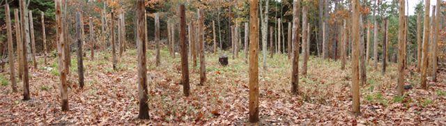 Forest Woodhenge - Scorpio wide