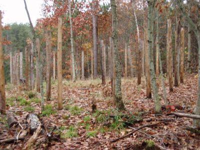 Forest Woodhenge - Scorpio - Western Rim