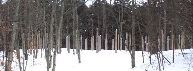 Forest Woodhenge at MidWinter 2009