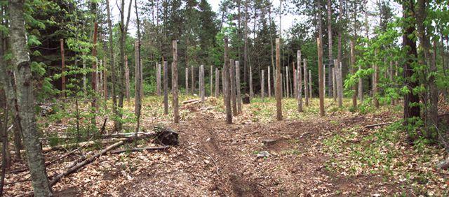 Post trails into woodhenge!