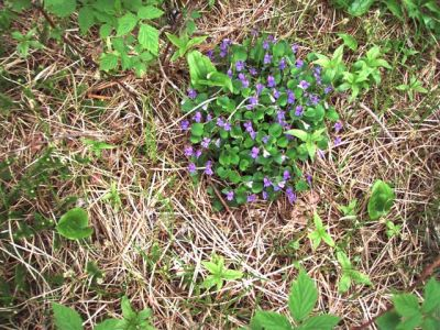 Flowers in the field!
