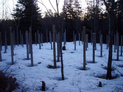Spring Equinox - snow melts around the posts first