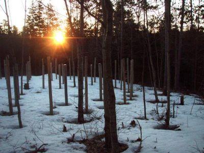 Forest Woodhenge - Spring Equinox - Sunrise
