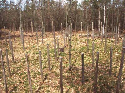 Woodhenge Midspring at Noon (2)