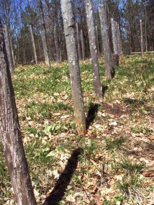 Forest Woodhenge True Noon (3)