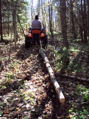Cutting and Haulin' Trees! (2)