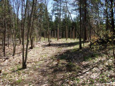 Forest Woodhenge Main Entrance