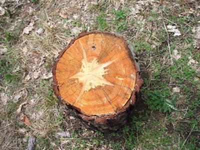 Star Stump refreshed!