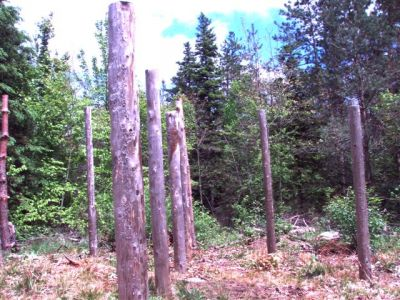 Forest Woodhenge East View!
