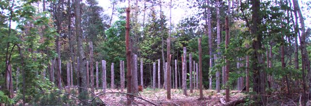 Woodhenge panorama