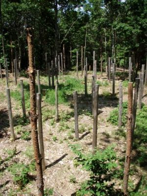 Forest Woodhenge Eastern half