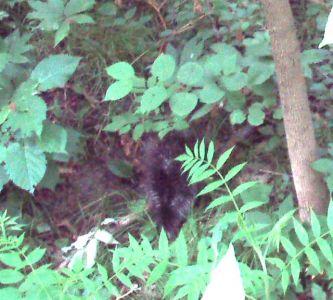 A Porcupine!