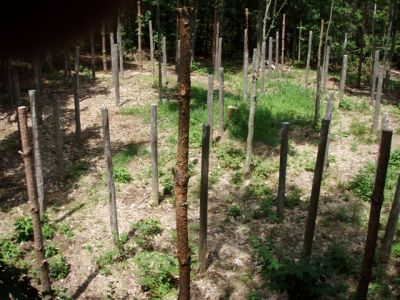 Forest Woodhenge - True Noon (2)