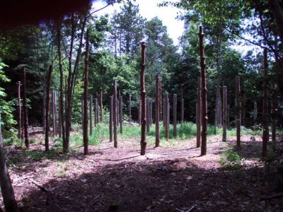 Forest Woodhenge - From Entrance