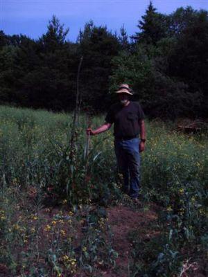 Garden Mound -Corn-Beans-Squash (2)