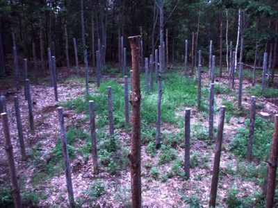 Forest Woodhenge - Centre