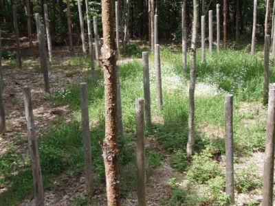Forest Woodhenge - Midsummer (2)