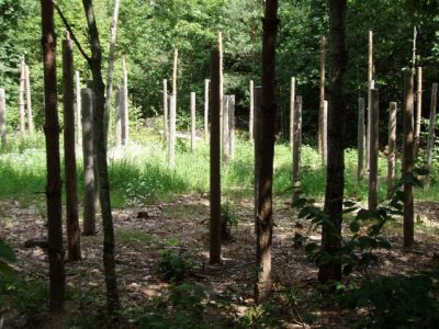 Forest Woodhenge - Midsummer (8)