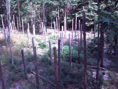 Forest Woodhenge Postholes (2)