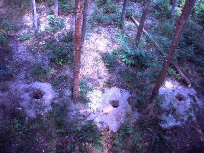 Forest Woodhenge Postholes (5)