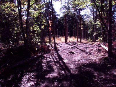 Forest Woodhenge Sept. 24, 2009 (2)