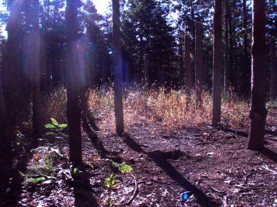 Forest Woodhenge Sept. 24, 2009 (4)