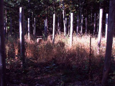 Forest Woodhenge Sept. 24, 2009 (5)