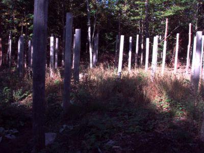 Forest Woodhenge Sept. 24, 2009 (6)