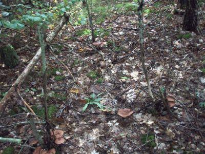 Forest Wonders: Mushrooms (2)