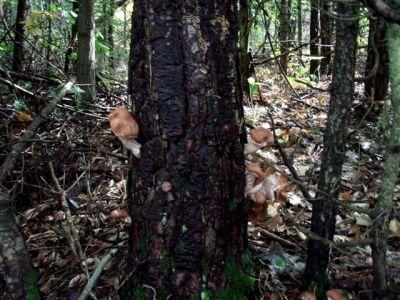 Forest Wonders: Mushrooms (4)