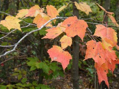 Fall Colours (2)