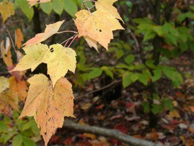 Fall Colours (3)