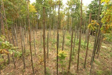 Forest-Woodhenge-Completion-Spiral